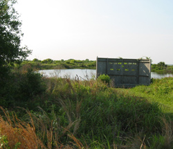 a bird blind on a Galveston Island pond