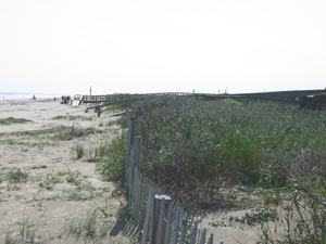 A view looking west along the dune that fronted the public beach area.